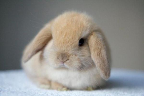 Thỏ trang trí
