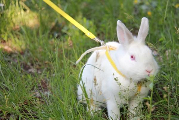 Cách chăm sóc thỏ