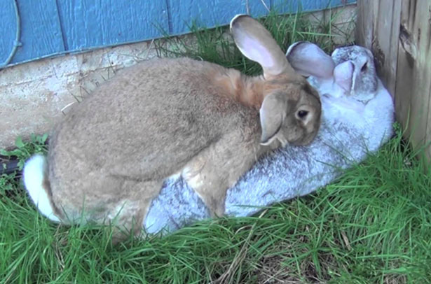 Trường hợp thỏ