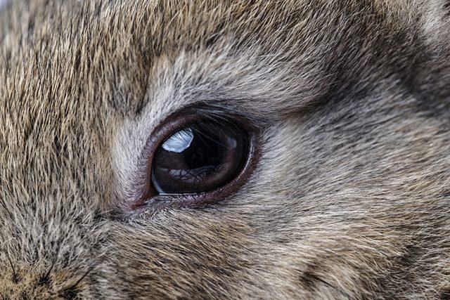 Bệnh về mắt thỏ