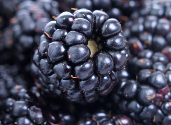 Thành phần, tính chất hữu ích và chống chỉ định của công thức nấu ăn blackberry, y tế và nấu ăn