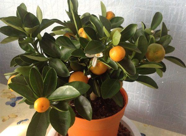 Phòng Mandarin
