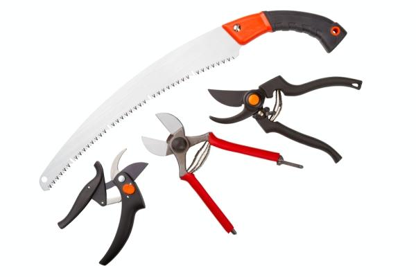 Một pruner, cưa sắt, dao vườn và lopper phải được mài sắc và khử trùng.