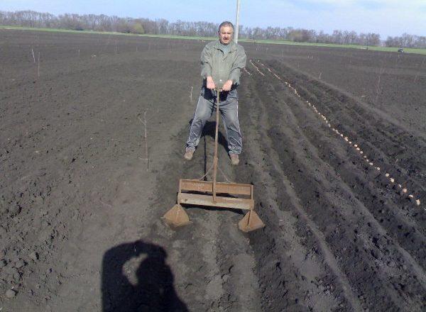Trồng khoai tây với các thiết bị cầm tay