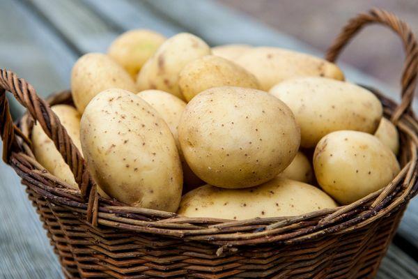 Các loại khoai tây tốt nhất