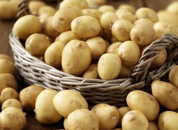 Giống khoai tây sớm