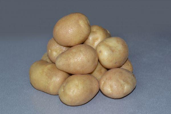 Giống khoai tây Luck