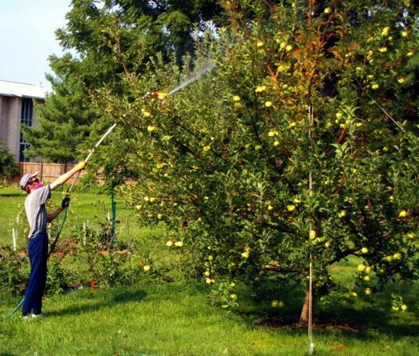 Điều khoản chế biến cây ăn quả