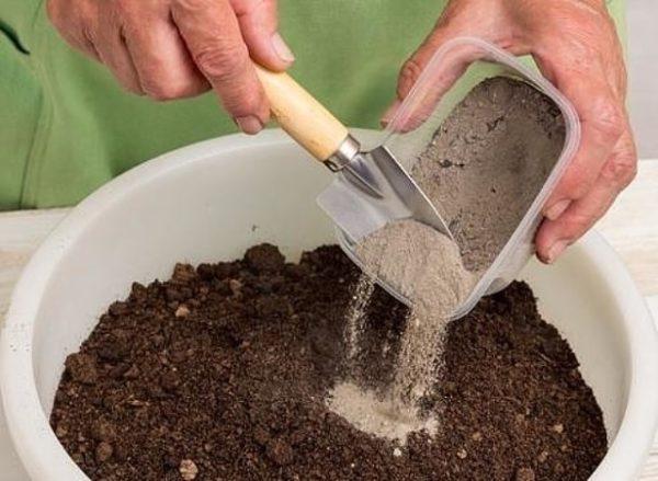 Tro có thể được trộn với đất và sau đó rải rác xung quanh cây.