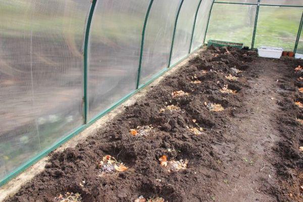 Chất hữu cơ phải được thêm vào giếng hoặc giường trước khi trồng.
