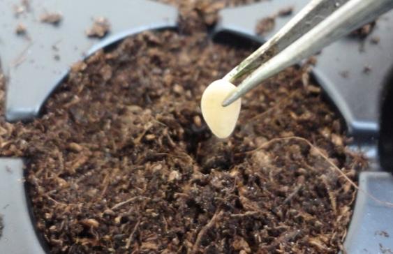 khi trồng cây dưa chuột