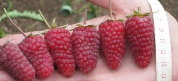 Nắp của Raspberry Monomakh khác với kích thước lớn