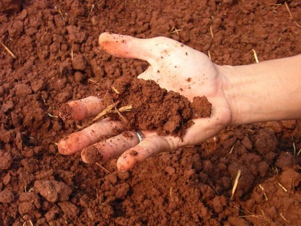 Nếu đất kiềm được tưới bằng giấm, phản ứng nên đi.