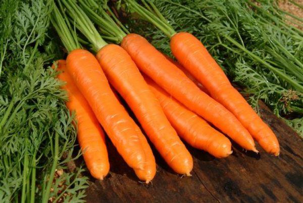 cà rốt tốt thu hoạch